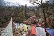 TripLovers_AnnapurnaCircuit_052