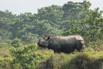 TripLovers_Chitwan_019b