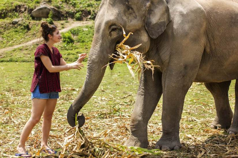Koh Samui Elephant Jungle Sanctuary