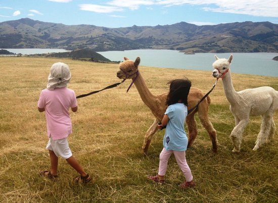 kids play in Shamarra Alpaca Farm