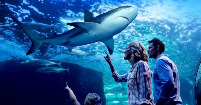 Cairns Aquarium kids