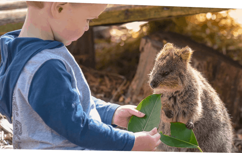 Children play with animal at the zoo