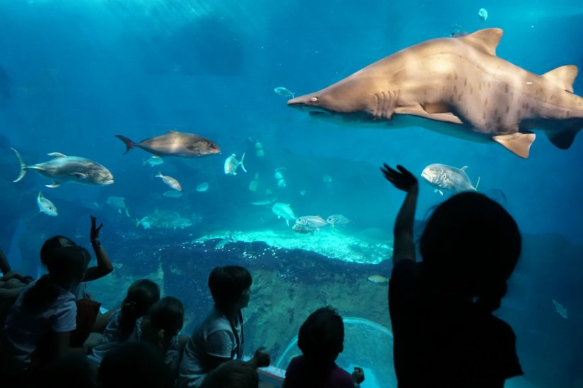 kids are seeing the shark at Seville Aquarium
