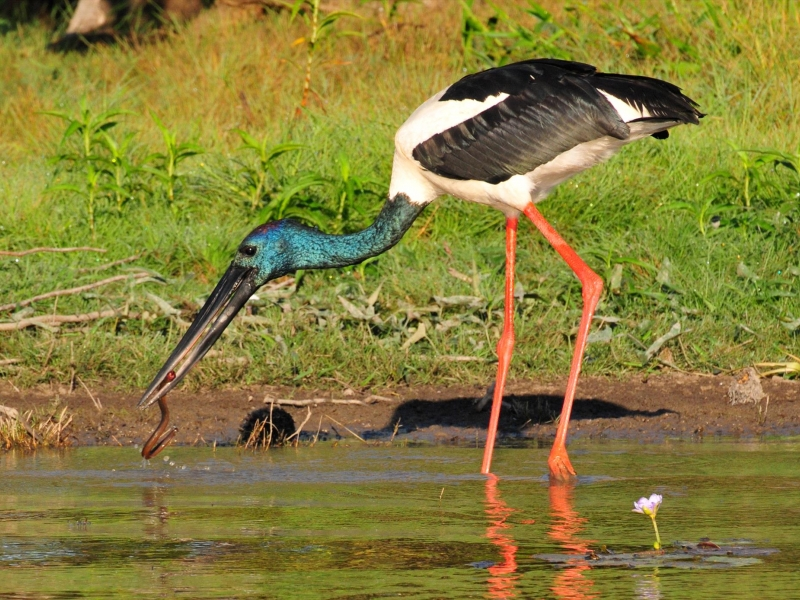 a bird that can see on wetland cruise