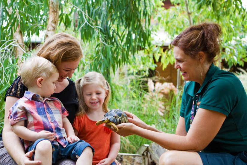 Mother and kids are seeing a turtle at Perth Zoo