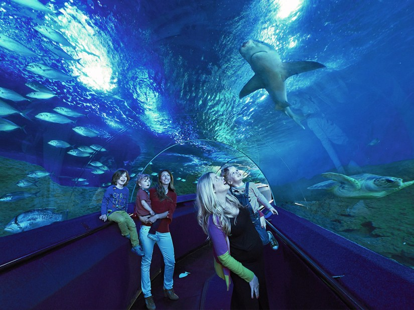 Mother and kids are seeing the shark at Aquarium Of Western Australia