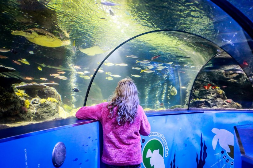 a girl is standing under the sea tunnel at SEA LIFE Scarborough Aquarium