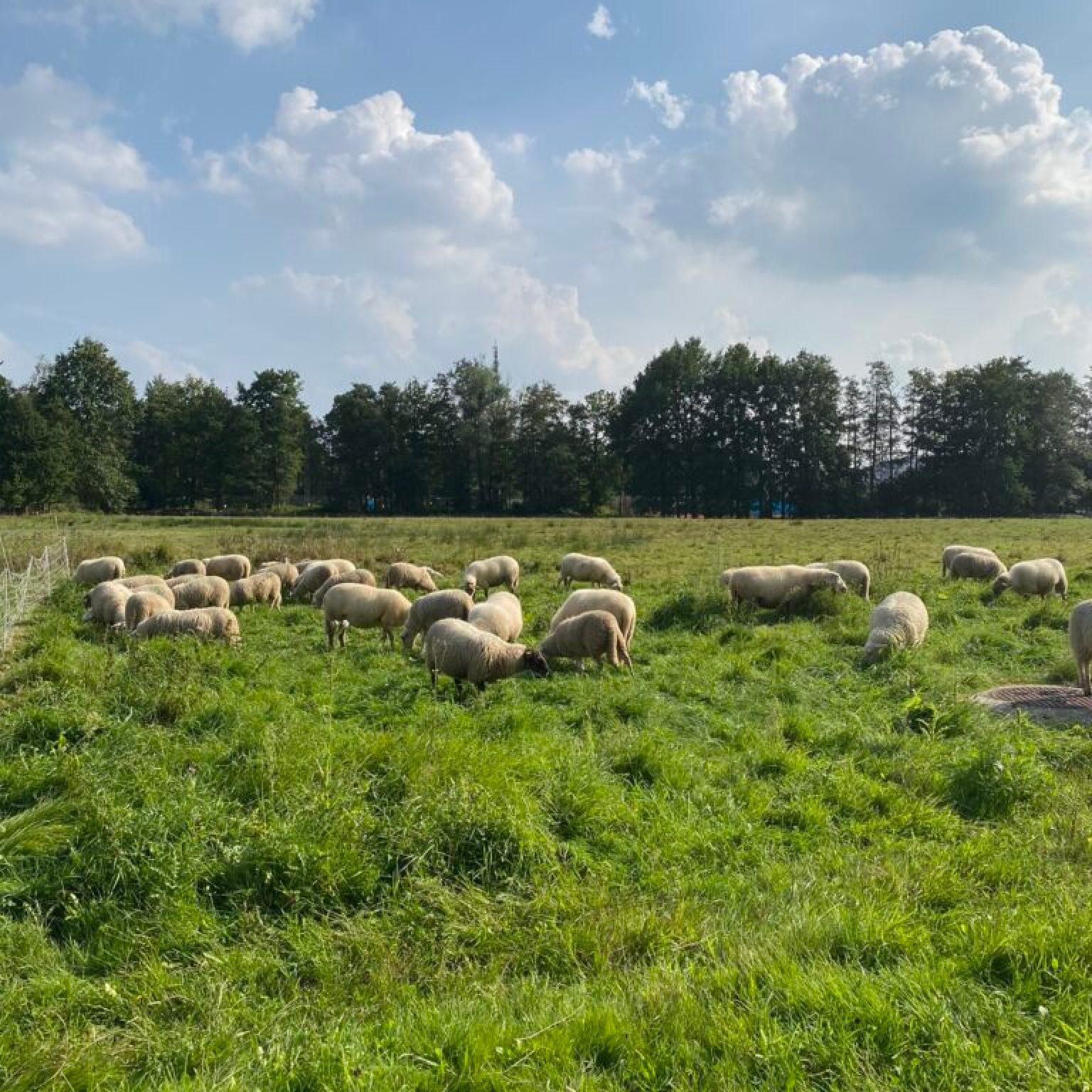 kinderboerderij limburg