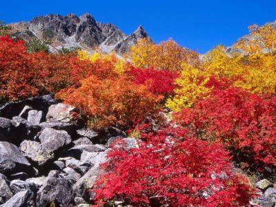 autumn-takayama