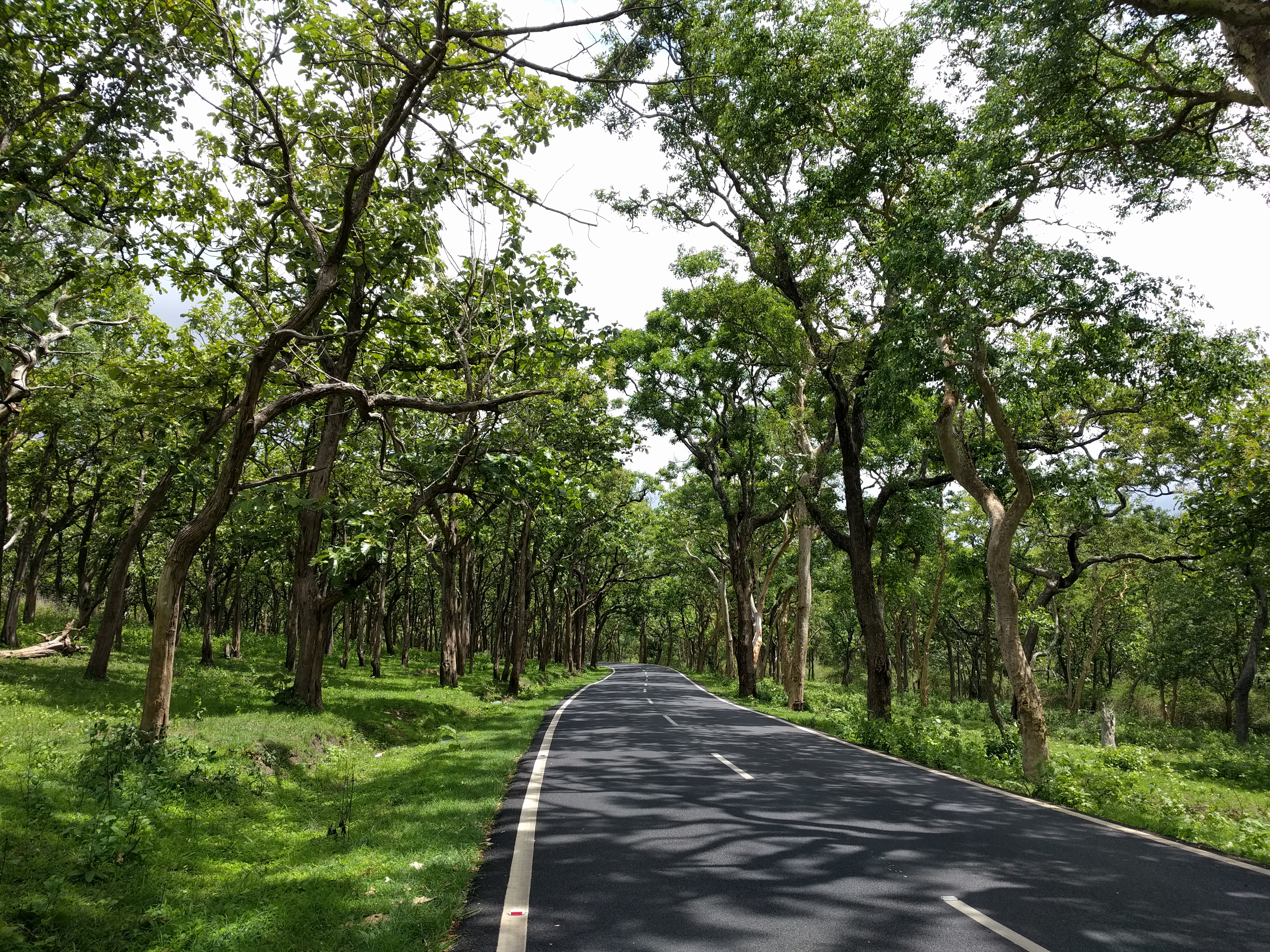 Bangalore to Bandipur Forest road trip