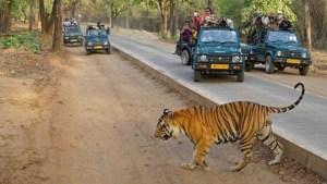 15 Best Destinations for Wildlife Safari in World