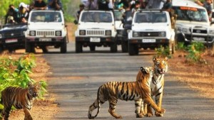 Top 15 National Parks in India Best fit for Safari