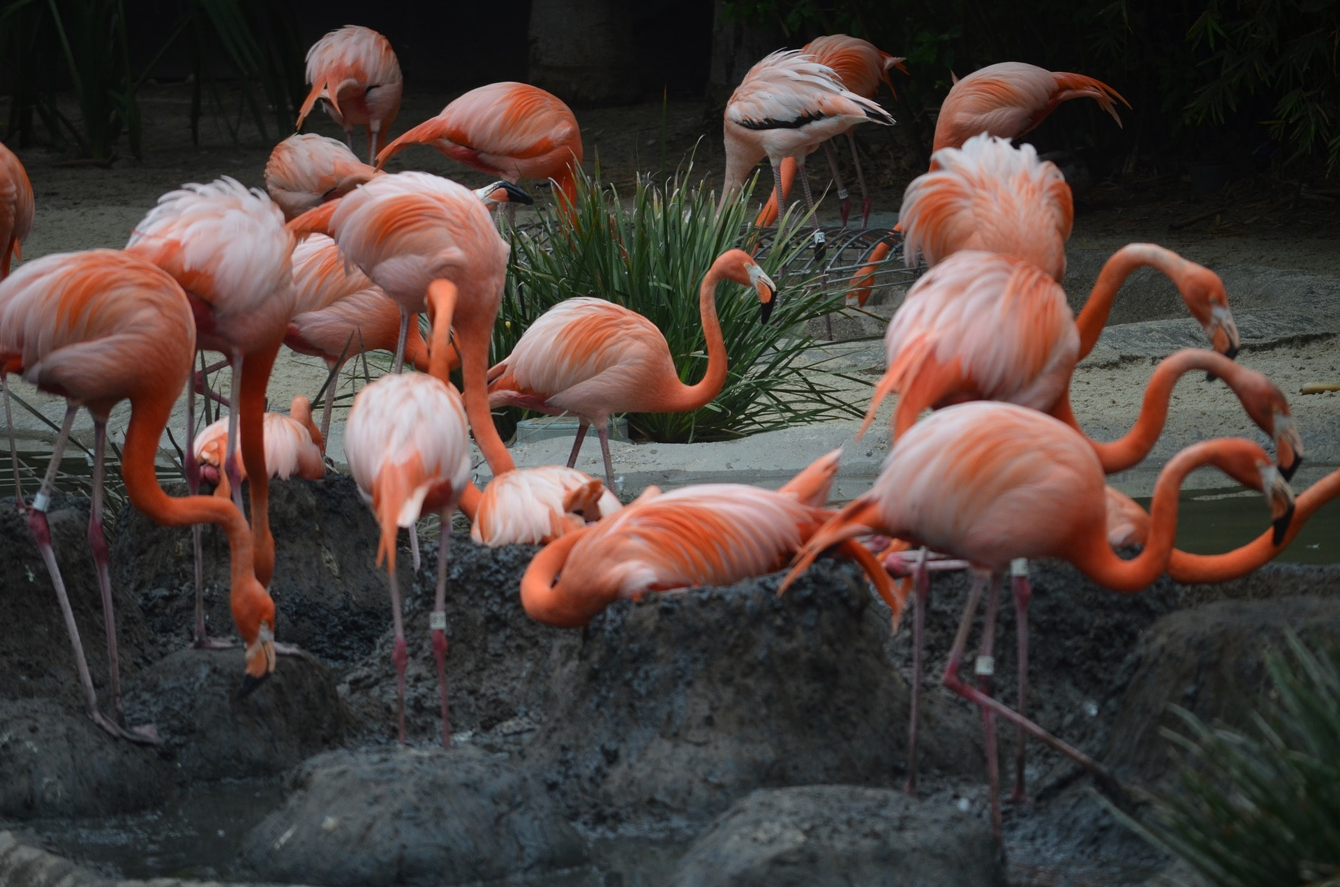 San Diego Zoo, California