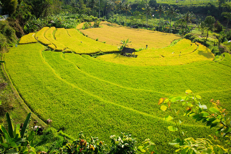The Sidemen Valley Tourist Attractions In Bali