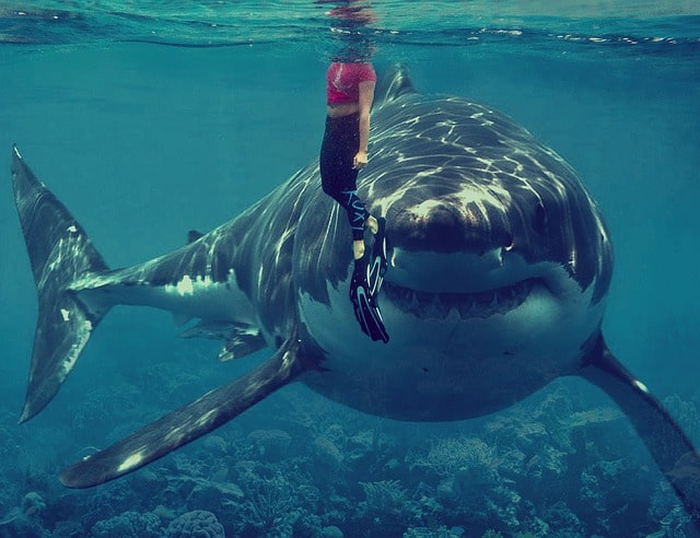 Swim with the Sharks