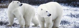12 Best Bear Watching Locations Around The World