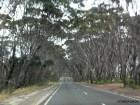 Kangaroo Island traffic