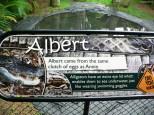 Let me introduce you...Albert!