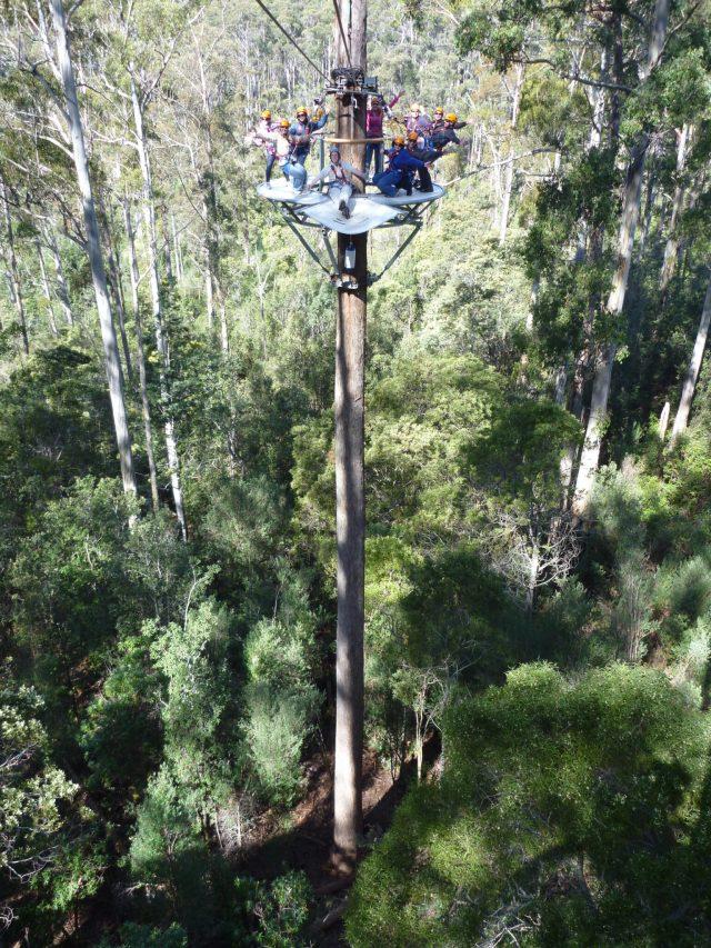 Hollybank Treetops