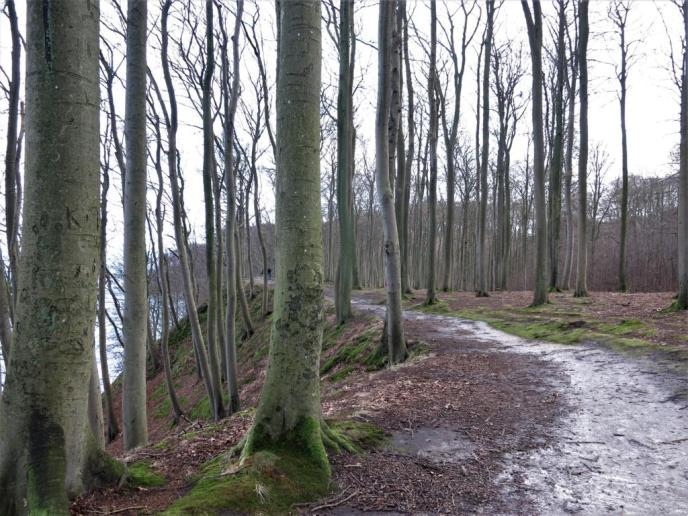 Hochuferweg Binz-Sellin