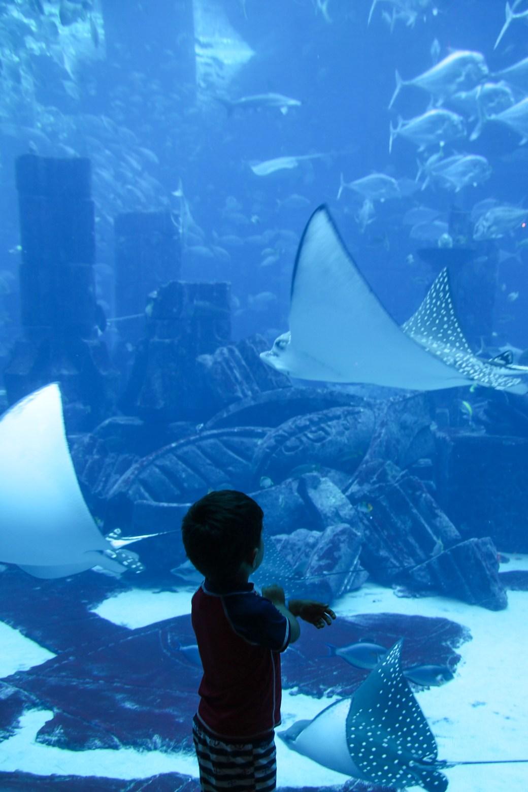 The Lost Chambers Aquarium- Atlantis (Dubai) with kids