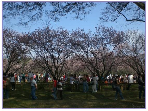 O Sakura Matsuri, que acontece em agosto na cidade.