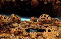 Stoned Ape & Fungal Intelligence
