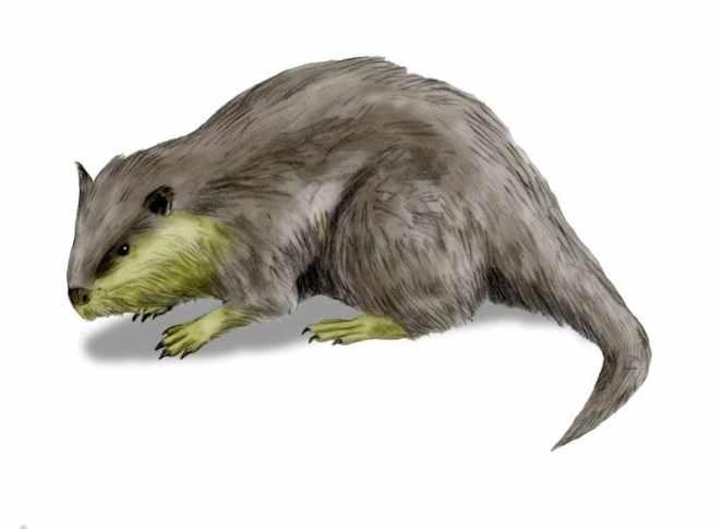 Palaeocastor
