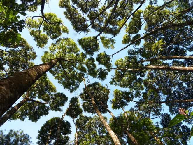 Crown Shyness in trees