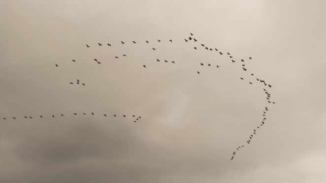 Valley of Falling Birds