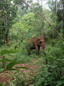Olifant in de jungle - Mondulkiri Project