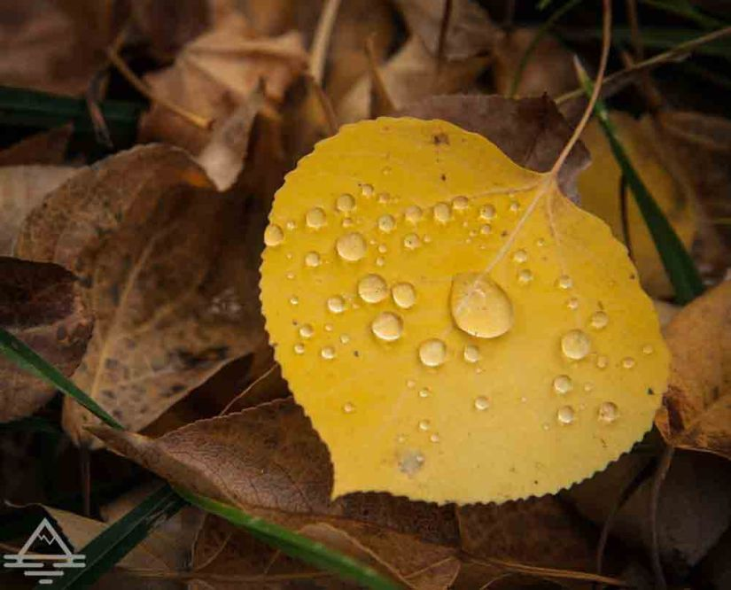 rocky-mountain-national-park-leaf3-trip