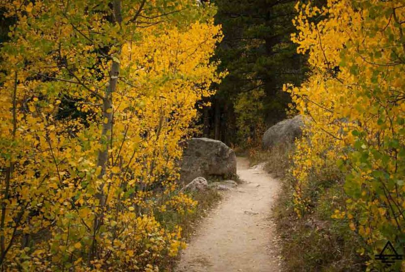 rocky-mountain-national-park-leaves1-trip