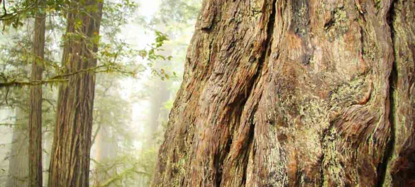 3 Tips for An Awesome Trip to the Redwoods
