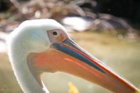 San Diego Zoo-3 trip