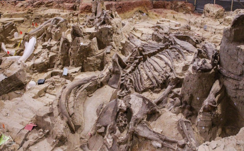 Mammoth Skeleton in the Ground at Hot Springs Mammoth Site