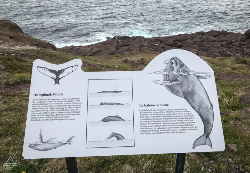 Newfoundland Cape Spear Whale Sign