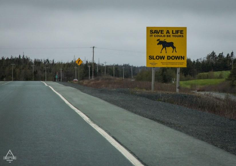 Beware of moose sign in Newfoundland
