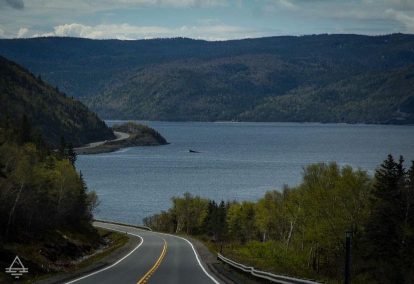 Highway in Gros Morne National Park