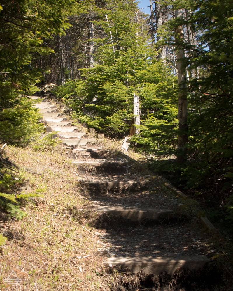 Stairs on Berry Hill Trail in Gros Morne