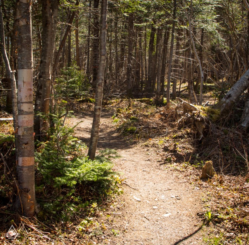 Gros Morne Hike - Berry Hill Trail
