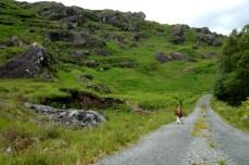 Griffin hiking at Glengarrif