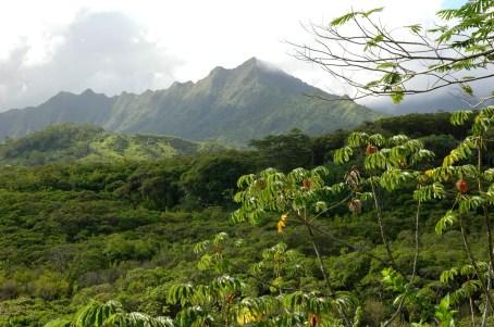 Hiking, Kuilau ridge trail