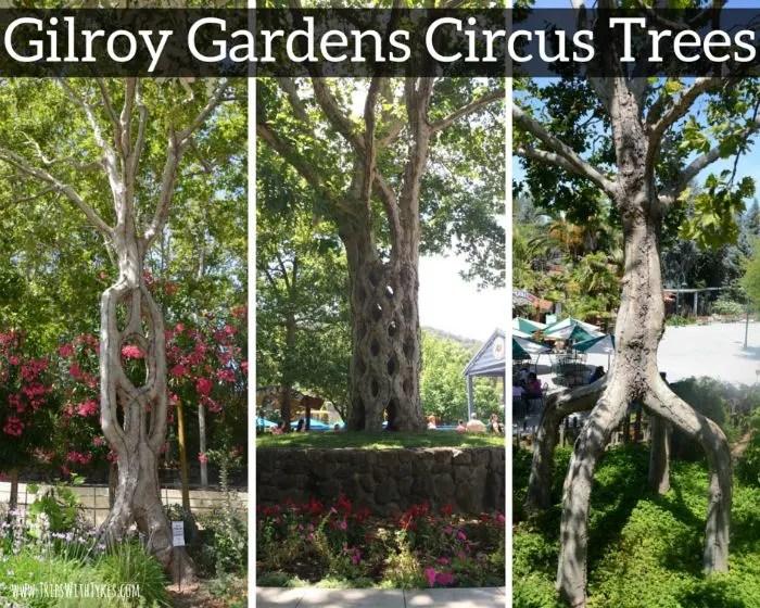 Gilroy Gardens Circus Trees