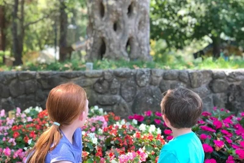 Gilroy Gardens Tips - Circus Trees