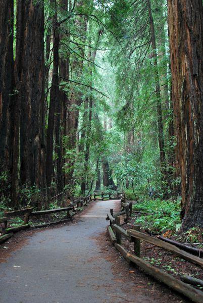 10 Kid-Friendly Day Trips Near San Francisco: Muir Woods