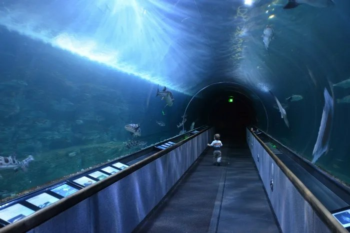 Fishermans Wharf San Francisco with Kids - Aquarium of the Bay tunnel
