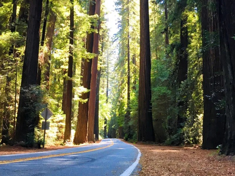 Tips for Family Road Trips on a Budget - Avenue of the Giants California