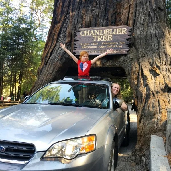 Tips for Family Road Trips on a Budget - Leggett Chandelier Drive-Thru Tree