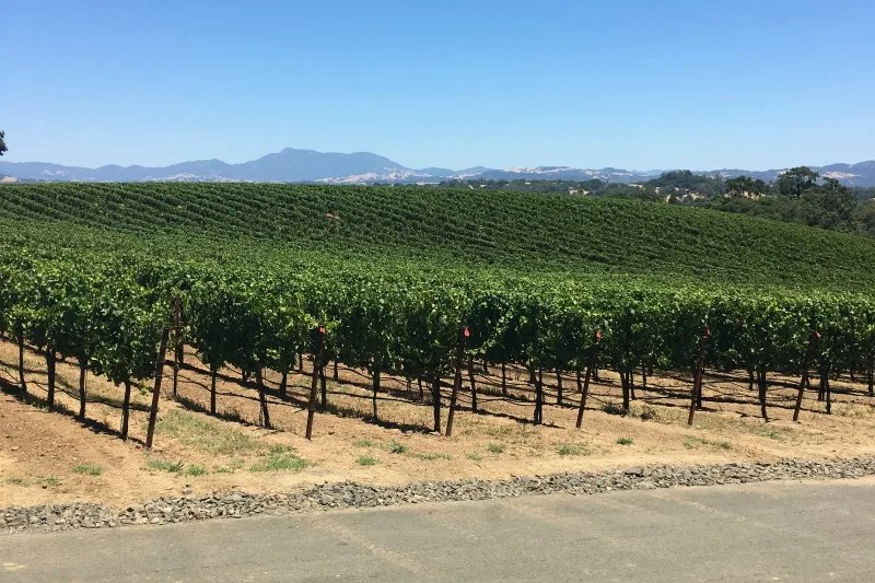 Winter Destinations in California - Napa Sonoma Wine Country